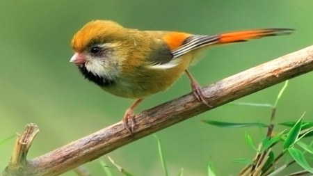 Exposition d'oiseaux aux élèves de 6ème primaire et visite didactique !